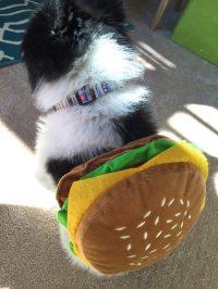 Hamburger Dog Costume Small Dog Halloween Costumes For