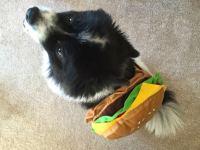Hamburger Dog Costume Buy Pet Hot Dog Hamburger Clothes Dog Cat