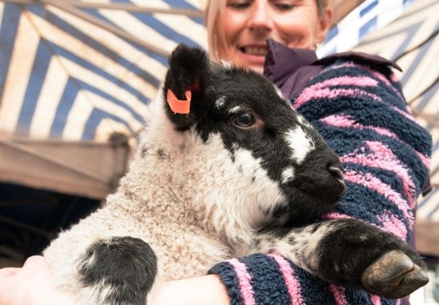 Cumbrian lamb