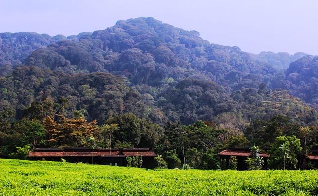 Nyungwe Forest Lodge view Rwanda - image zoedawes