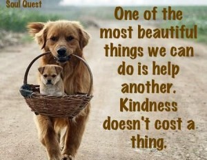 Good Quotes Wallpaper For Facebook Pawsitive Quotes About Dogs