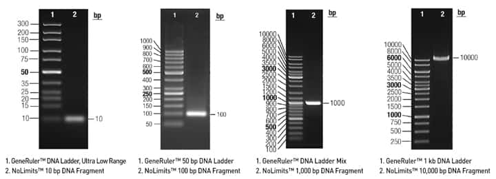 25 Bp Dna Ladder Image And Wallpaper Geoimageco