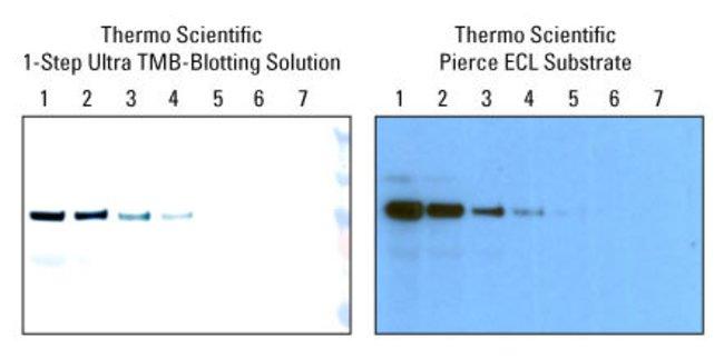 Far-Western Blot Analysis Thermo Fisher Scientific - US