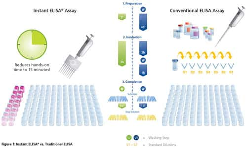 Overview of ELISA Thermo Fisher Scientific - US
