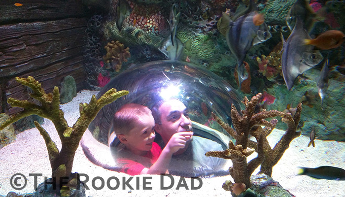 Sea Life Kansas City - A Must See in Kansas City