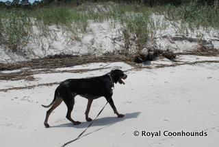 Bella the Beach Bum