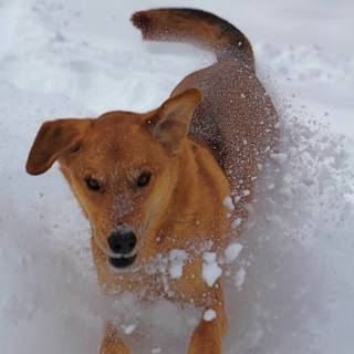Winter Hazards: Protecting Your Pup from Hypothermia & Frostbite