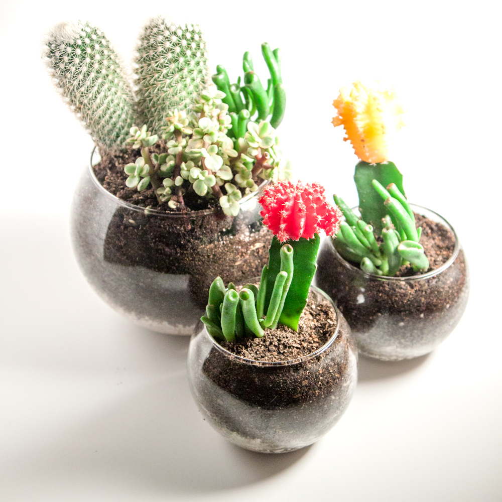 diy succulent cactus terrariums thesassylife. Black Bedroom Furniture Sets. Home Design Ideas
