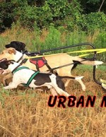 URBAN MUSHING COLUMN