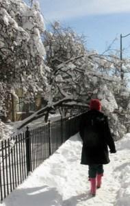 blizzard '10 more snow scenes 028