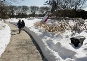 ice skating.Feb 2010 017