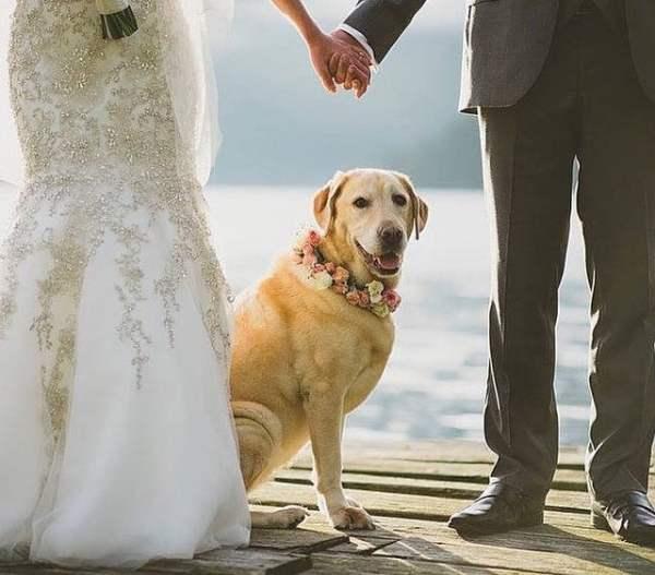 pet_friendly wedding_5