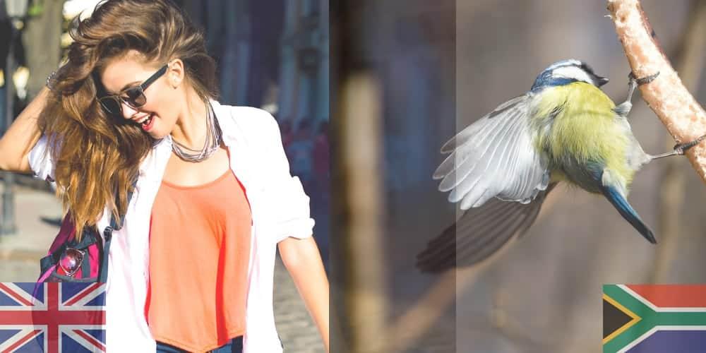 bird_UK_SA