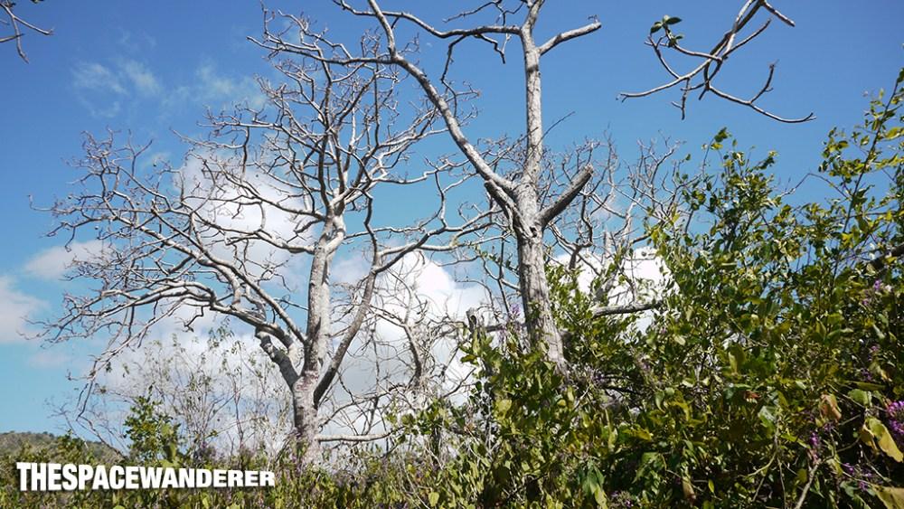 komodo-island-25-tree