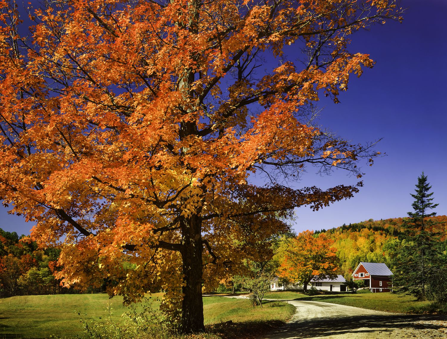 Pretty Fall Desktop Wallpaper Attract Buyers With Colorful Fall Landscaping Ideas