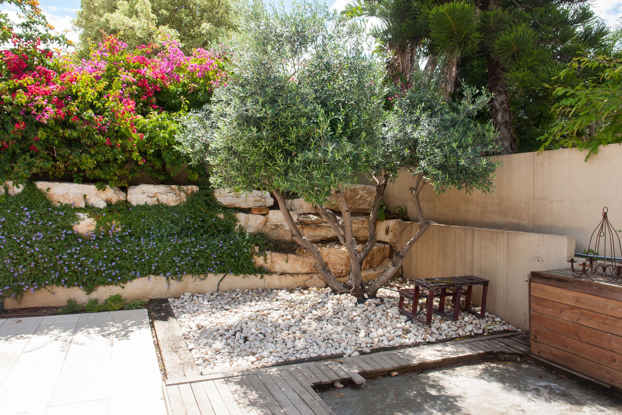 How To Grow Fruitless Olive Trees