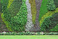 Vertical Garden History - The Best Plants for Walls