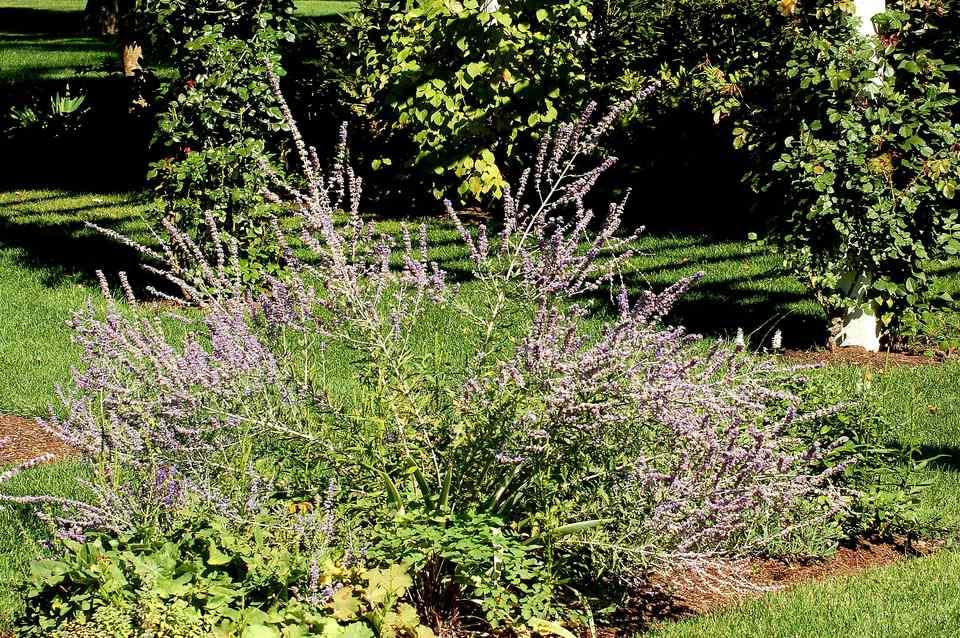 Feng Shui Garden Plantsmodern Landscaping Ideas For The