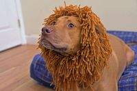 How to Make a Lion Costume for Your Dog