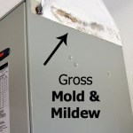 Get Rid Of Ugly (Gross) Mold And Mildew Fast