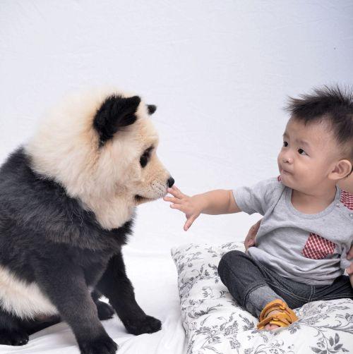Medium Of Dog That Looks Like A Bear