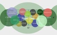A Subtropical Fruit Tree Guild | The Survival Gardener