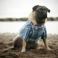 1000+ images about Cute pug clothes and costumes on ...