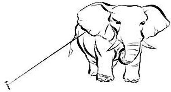 mentalita-bob-proctor-elefante