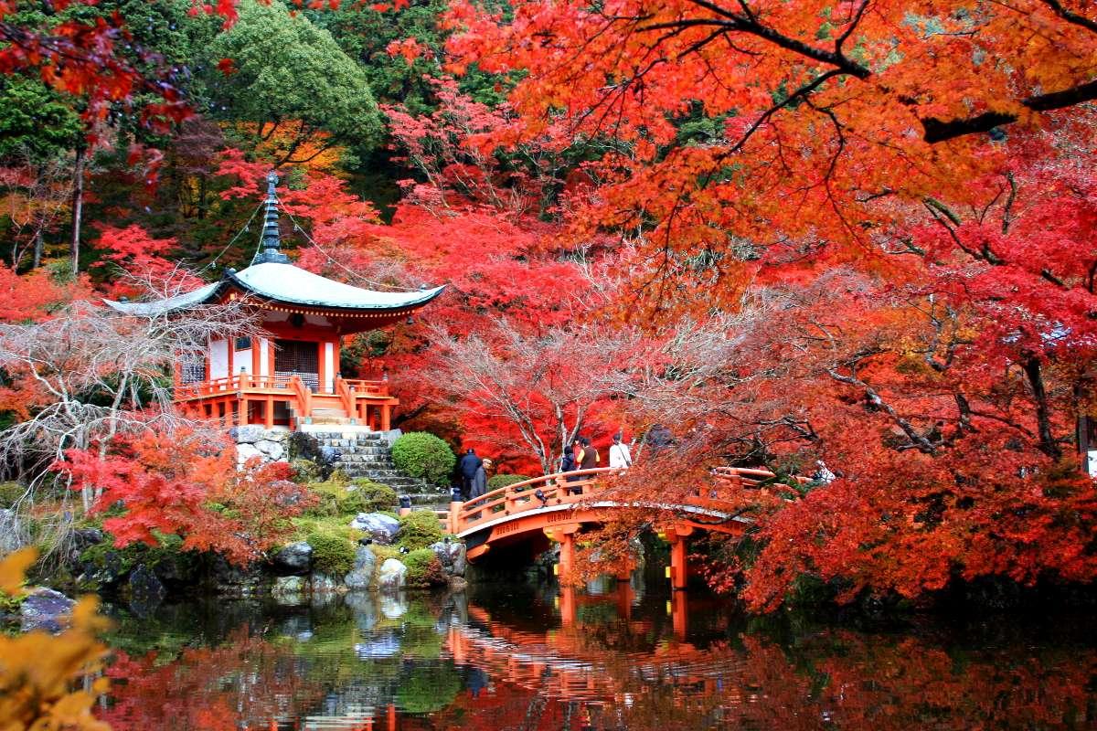 Scenic Fall Wallpaper The Momiji Gari Red Leaf Hunting In Kyoto