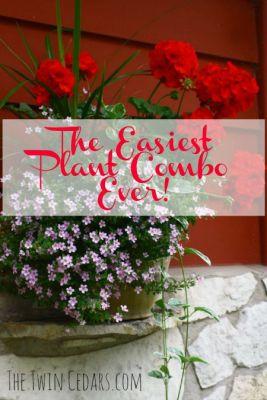 Easy Geranium Combination & a dose of humble