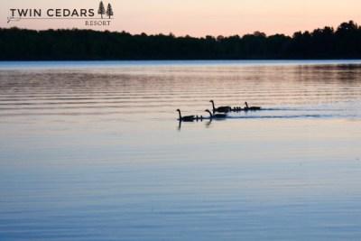 Twin Cedars Resort robins nest, resort year in review 2015
