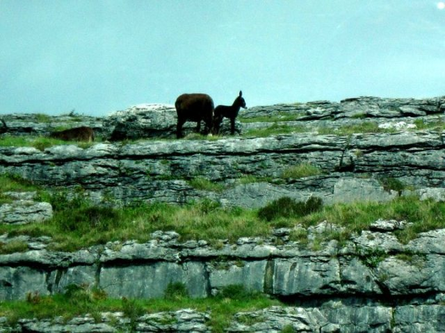 Burren, Cliffs of Moher, Ireland