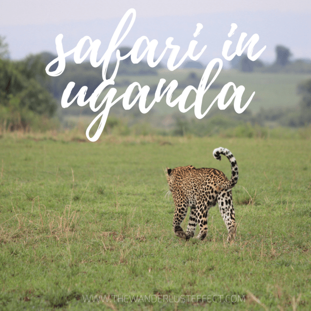 Safari in Uganda, Queen Elizabeth National Park