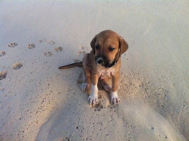 AARF Anguilla, 25 Things to Do in Anguilla
