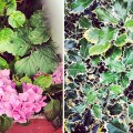instagram_flowers_pink_spiny_leaves