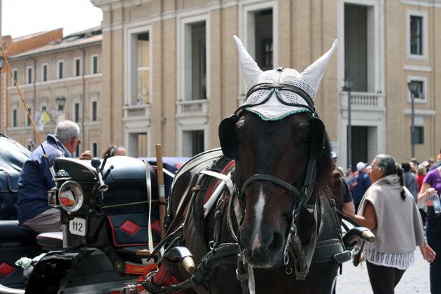 rome-passeggiata-discover-architecture-horse-vatican-10