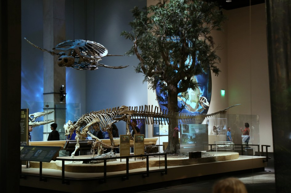 Museum TX 7a