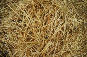 Fresh Wheat Straw for Cob