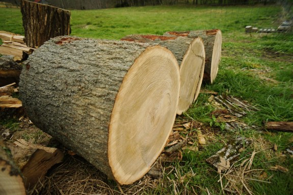 Red Oak Logs for Making Shakes
