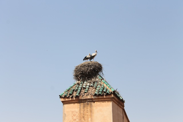 White storks nesting on the palace walls, Pierre will tell you interesting things about them because I can't remember