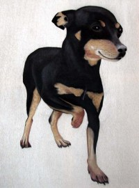 Chien Pinscher chien-pinscher-pinscher-nain-animal ...