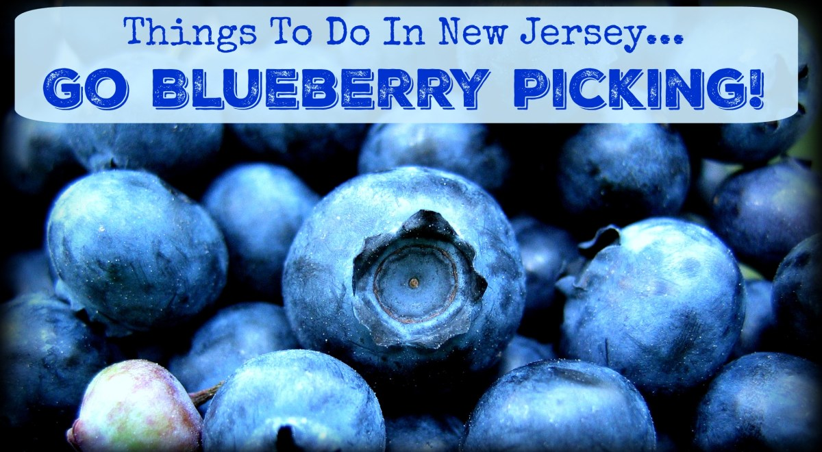 Things to Do In New Jersey – Blueberry Picking!