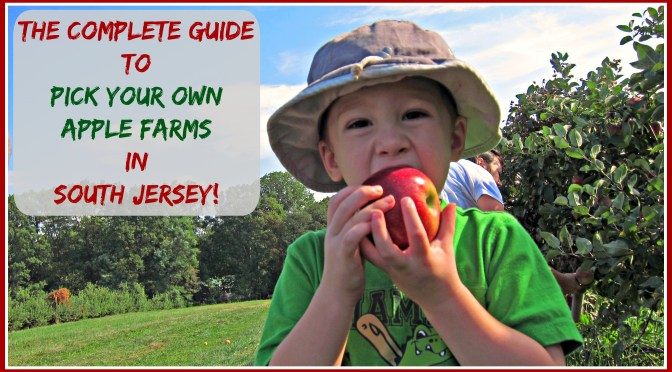 The Complete Guide to Pick Your Own Apple Farms in South Jersey! Apple Picking in South Jersey = Fun On The Farm!!! | find out more at www.thingstodonewjersey.com | #nj #newjersey #southjersey #burlingtoncounty #gloucestercounty #pickyourown #apples #applepicking #farms #familyfriendly #fun #daytrips #fieldtrips