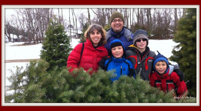 Christmas tree farm in New Jersey