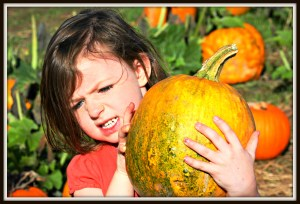 Pumpkin Picking | Things To Do In New Jersey | #pumpkinpicking #pickyourownpumpkins #pumpkins #nj #newjersey #kids #fall #daytrips