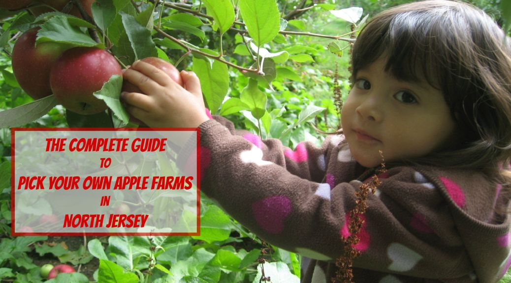 Where to Pick Apples in New Jersey (North) | find out more at www.thingstodonewjersey.com | #nj #newjersey #northjersey #bergencounty #sussexcounty #morriscounty #warrencounty #applepicking #pickyourownapplefarms #farms #pickyourown #apples #gardenstate #jerseyfresh #fall2015 #thingstodo #familyfriendly #fieldtrips #daytrips | pick your own apple farms in north jersey | pick your own apple farms in nj | pick your own apple farms in new jersey | apple picking in north jersey | apple picking in nj | apple picking in new jersey | pick your own apple farms in north jersey