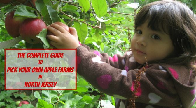 The Complete Guide to Pick Your Own Apple Farms in North Jersey