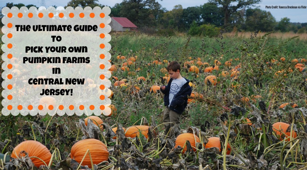 The Ultimate Guide to Pumpkin Picking In Central New Jersey | Things to Do In New Jersey | #pumpkinpicking #pickyourownpumpkins #nj #newjersey #pumpkins #farms #kids #fall #daytrips