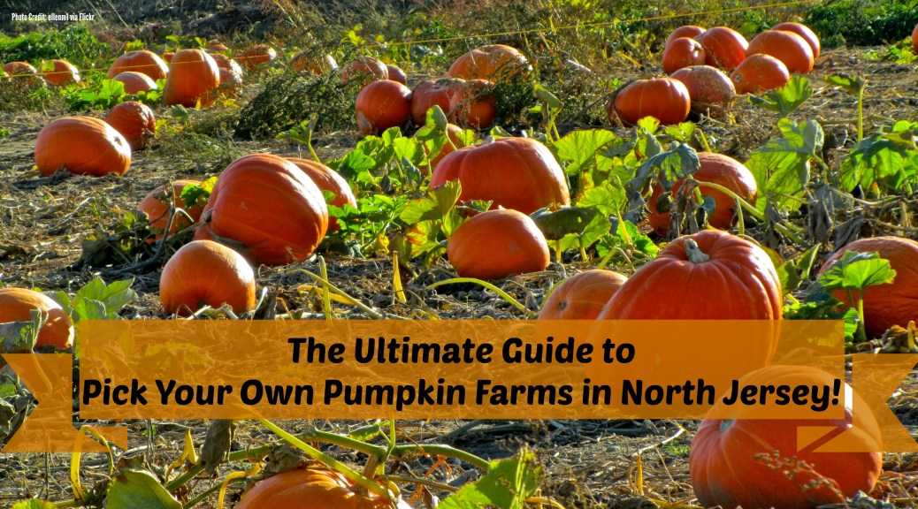 pick your own pumpkin farms in North Jersey | pumpkin picking in north jersey | pumpkin picking in nj