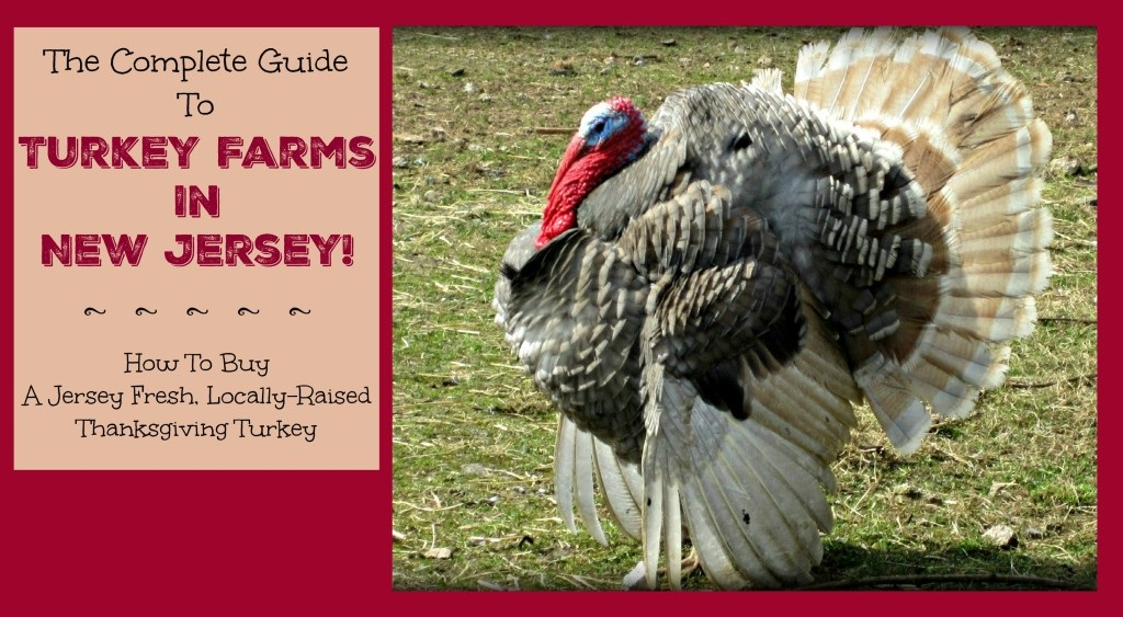 The Complete Guide to Turkey Farms In New Jersey
